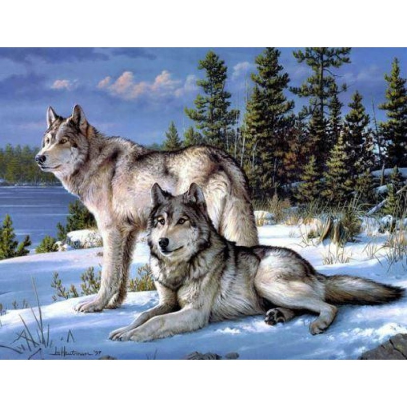 A Pair of White Wolf...