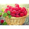 Basket of Berries Diamond Art Kit