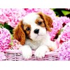Sweet Puppy & Pink Flowers