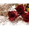 Three Lovely Red Roses