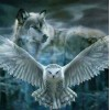 Flying Owl & Wolf Painting Kit